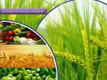 Fabricante e fornecedor de pesticidas em todo o mundo - photo 1