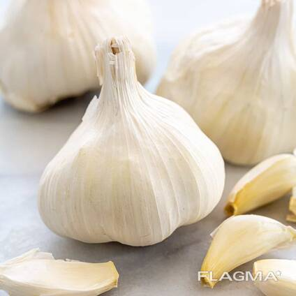 Garlic available in all quantities