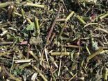 Medicinal herbs - photo 4