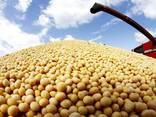 SOYBEAN GMO - фото 1
