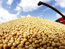SOYBEAN NO GMO