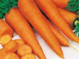 Сушеные овощи и зелень ! - фото 4