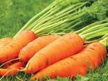 Сушеные овощи и зелень ! - фото 7