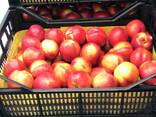 Sweet and juicy Peach, Nectarine and Cherry time. - фото 4